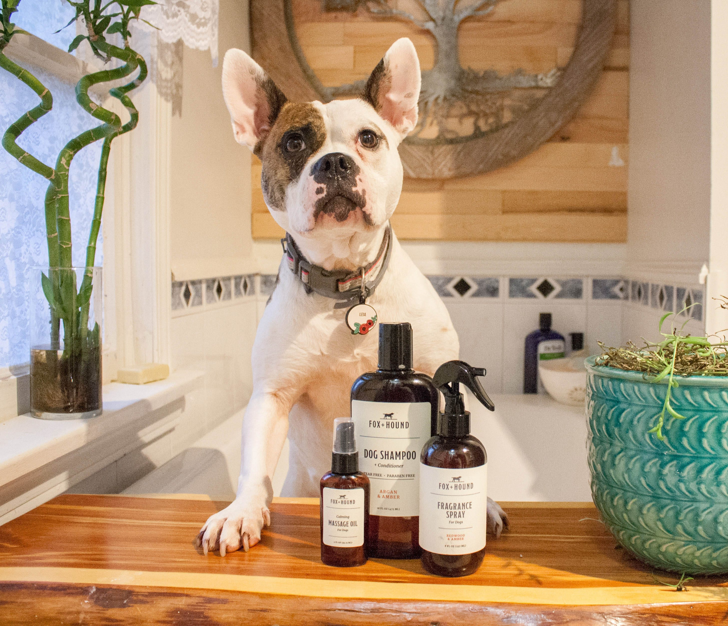Dog with Dog Cleaning Products