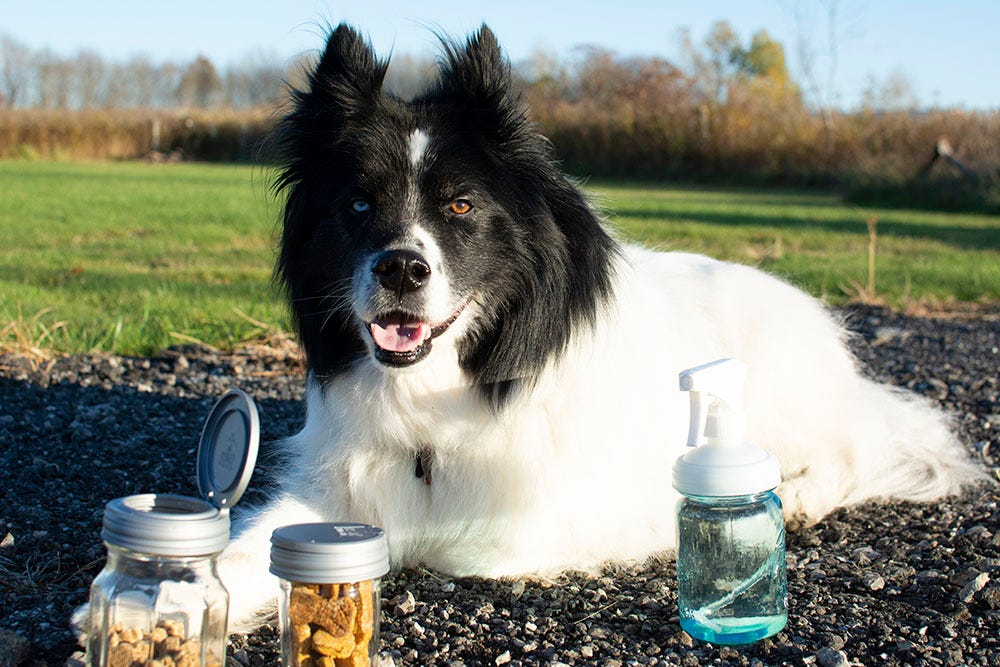 dog care kit contents