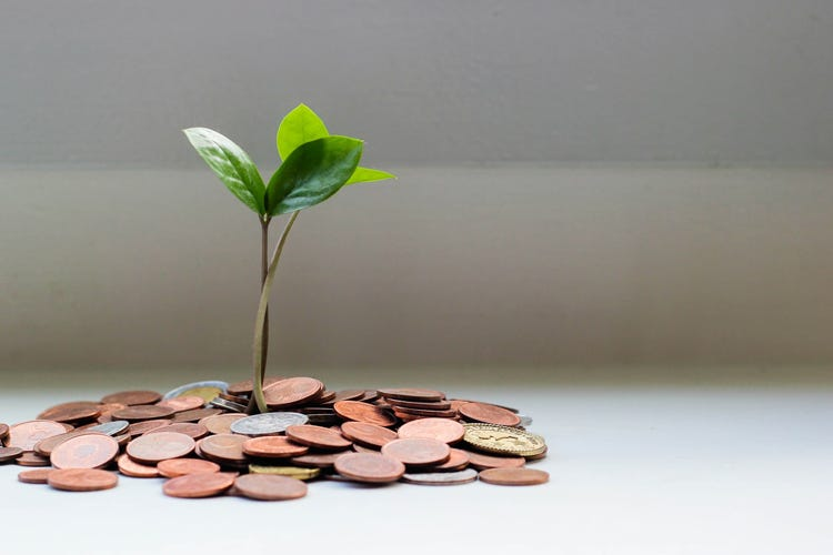 Coins surrounding a small, green plant.