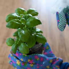 DIY Herb Care Kit: Grow Basil, Thyme, and Rosemary in Mason Jars