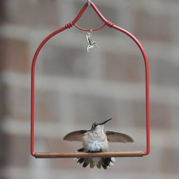 A hummingbird swing that is both comfortable and stylish.