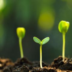 Is Mold in Your Soil Good or Bad? Lessons in Soil Microbiology