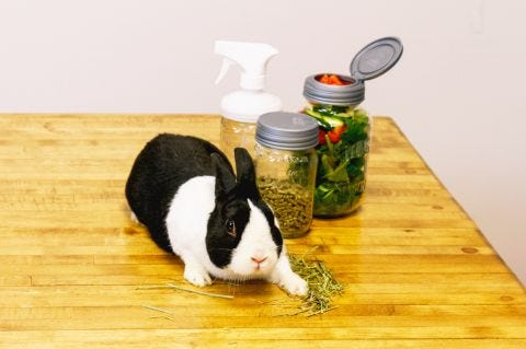 Bunny Meal Prep with the DIY Rabbit Care Kit