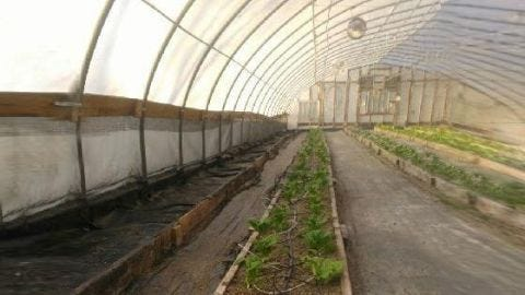 'Tis the Season for Growing Cold Crops with PittMoss!