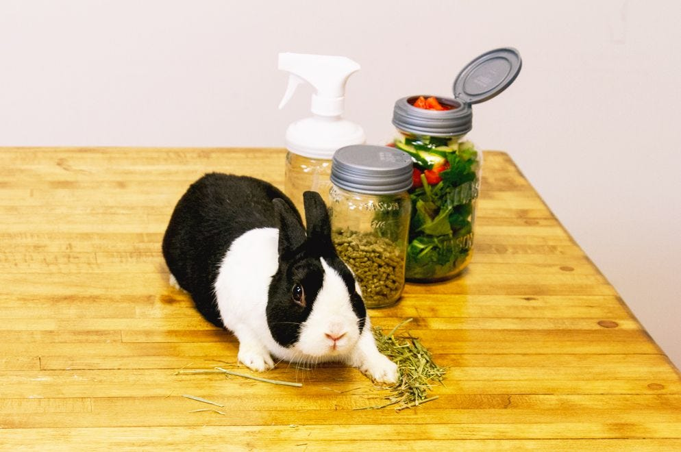 Bunny Meal Prep with the DIY Rabbit Care Kit how to.