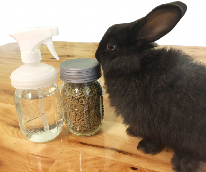 Mason Jars DIY Kit: Rabbit Care